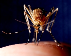 mosquito control victoria texas
